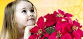 Online cvjećara Bosne i Hercegovine
