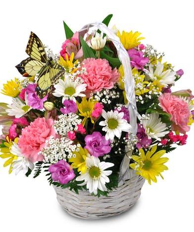 cvjećara sarajevo